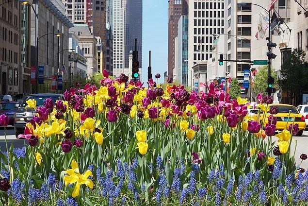 12. Baharın gelişiyle açan çiçeklerin, gri bir şehri ele geçirmesine şahit olmak.
