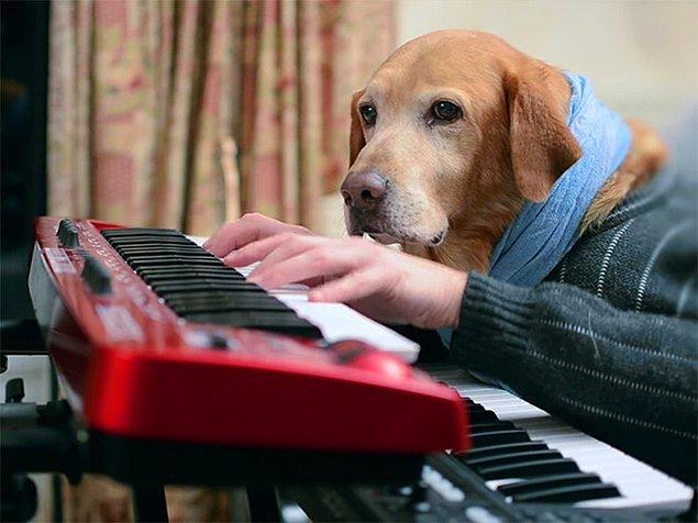 """2. """"Nikahına beniiğ çağır sevgilim, istersen beagle'ın olurum senin"""""""