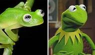 Kermit'in Gerçek Hayatta Var Olduğunu Biliyor muydunuz?