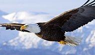 Dünyada uçarak en yükseğe çıkabilen kuş türü