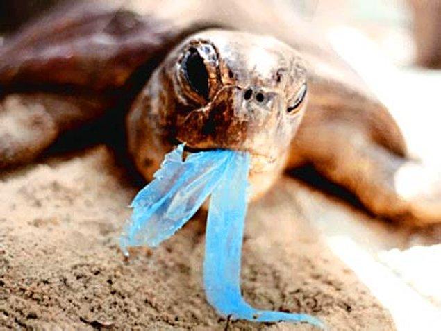 15. Binlerce deniz hayvanı, balıklar, deniz kaplumbağaları, yunus balıkları, vs. deniz anası sandığı naylon poşetleri yutarak ölmektedir.
