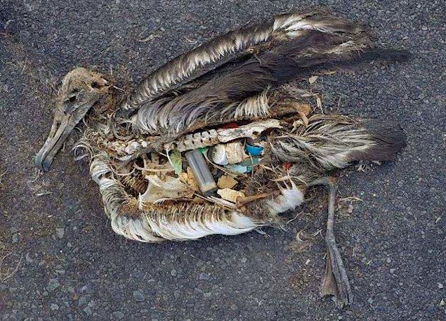 Bonus - Deniz kuşu türlerinin neredeyse yarısının, deniz memelilerinin ve deniz kaplumbağalarının %22'sinin ve her geçen gün artan sayıda balığın vücutlarında plastik atıklara rastlanmaktadır.