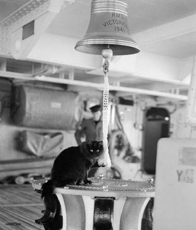 Gemiciler siyah kedilerin uzun yolculaklar da onlara bolluk ve iyi şans getirdiğine inanırdı