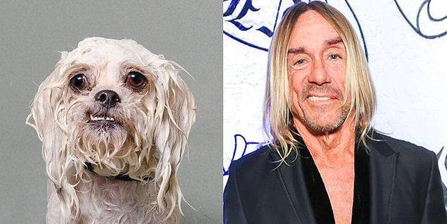 3. Iggy Pup