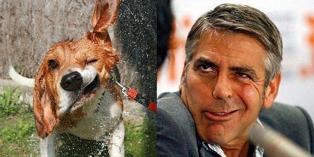 4. George Coon-hound
