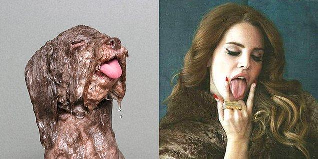 10. Lana del Greyhound