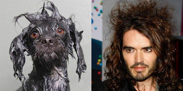 11. Jack-Russell Brand