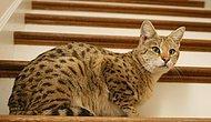Kediler ile Merdivenler Arasında Bulunan Büyük Aşkı Gösteren 22 Fotoğraf