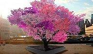 Tam 40 Farklı Meyve Verebilen Ağaçla Tanışın!