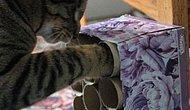 Kedinize Sıkılmayacağı Bir Ev Ortamı Sunmak İçin 10 Öneri
