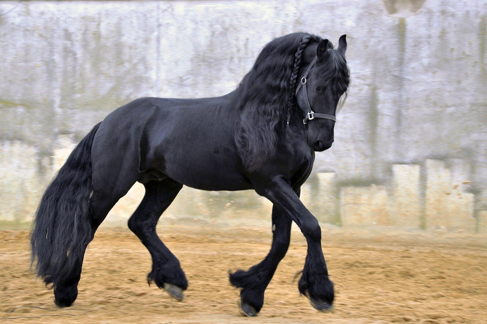 Sırtına Binip Bu Diyarlardan Kaçmak İsteyeceğiniz 10 At Cinsi - onedio.com