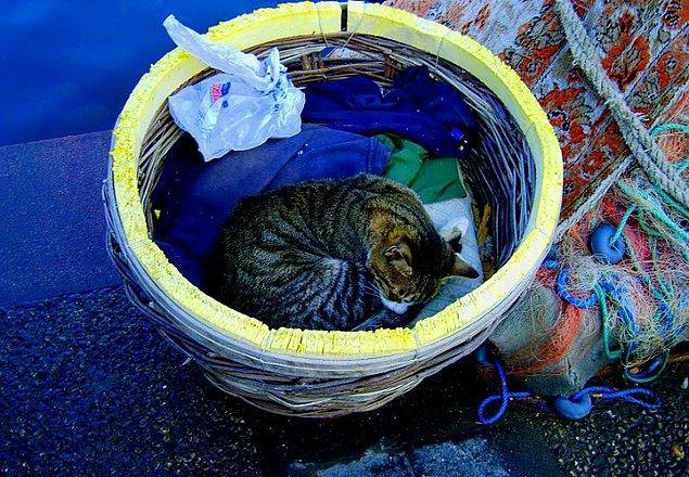 5. Kedilerine kadar huzurlu bireylerin toplanma noktası