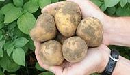 Patatesin Kilosu Nasıl 5 Lira Oldu?