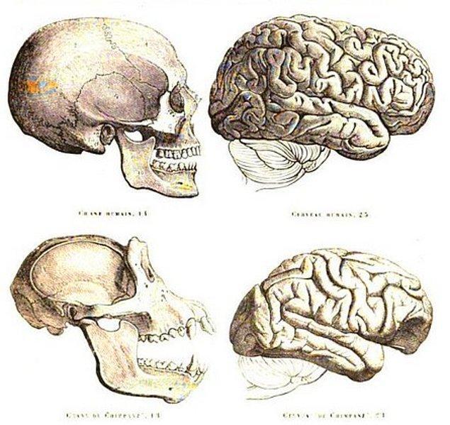 6. İnsan Beyni