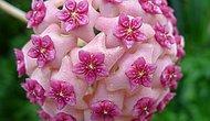 Simetri Takıntınızı Ortaya Çıkaracak 20 Geometrik Bitki
