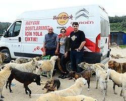 Hard Rock Cafe Istanbul'da Artan Yemekler Bolluca Hayvan Barınağına Veriliyor