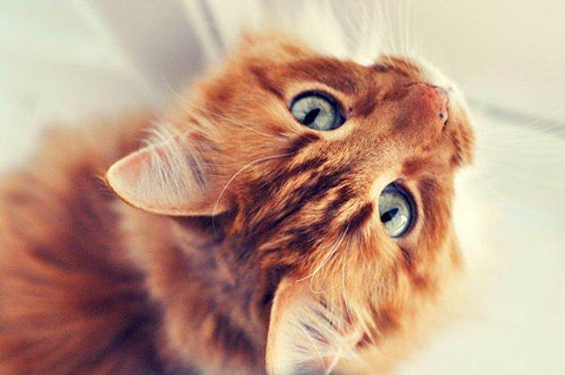 Kedi!