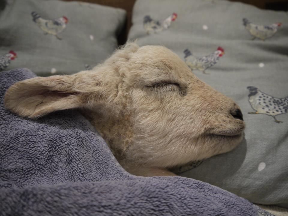 забывайте, что барашек спит картинка правило