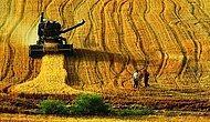 Türkiye Dokuz Yılda Bolu Kadar Tarım Toprağı Kaybetti