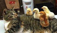 Alışık Olmadıkları Hayvanları Uzaylı Sanıp Hayrete Dört Ayak Üstü Düşen 17 Kedi