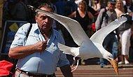Kuş Gibi Özgür Olmak Deyimini Çok Yanlış Anlayıp Yiyecek Hırsızlığı Yapan 15 Zalım Kuş
