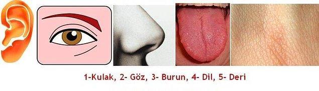 8. İnsanda 5 duyu yoktur.