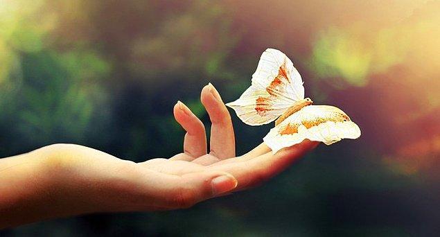 7. Kelebeklerin ömrü bir gün değildir.