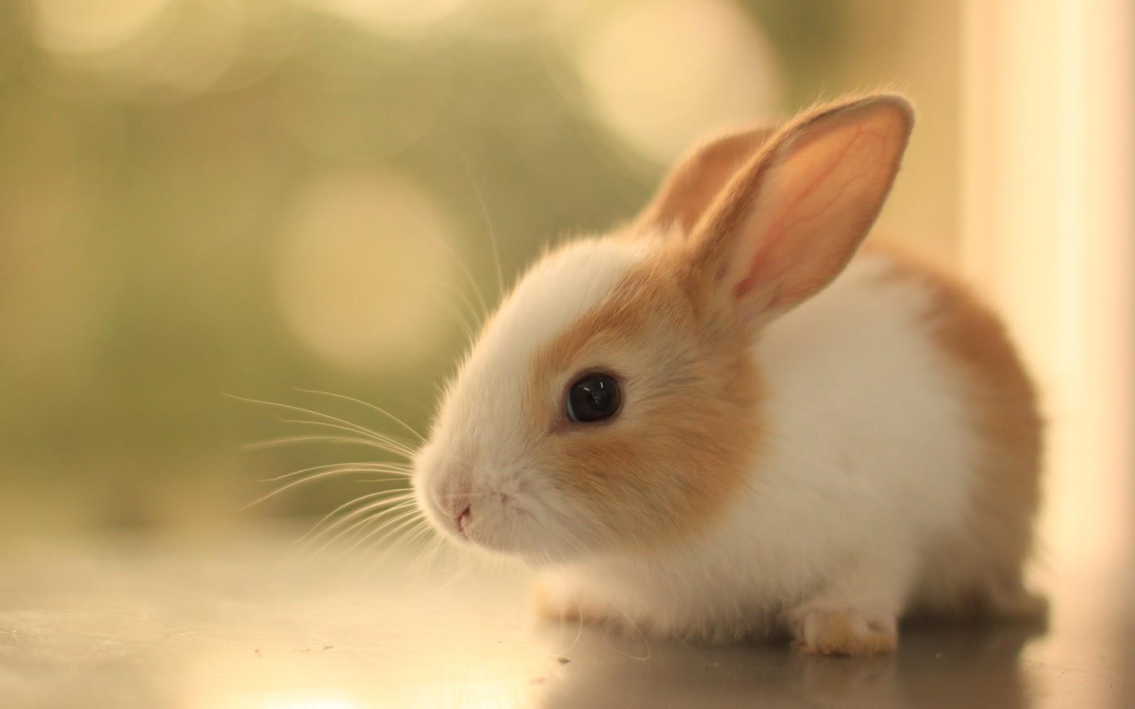 Tavşan Sahibi Olanların Iyi Bildiği 11 şey Onediocom