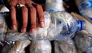 Hayvan Hakları Adına Önemli Bir Gelişme: Uluslararası Hayvan Hakları Mahkemesi