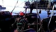 Köpeğe Havada Takla Attıran Fok Balığı
