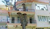 Bu İşlerin Ağaç Katletmeden de Yapılabileceğini Gösteren Ağaçlarla İç İçe 17 Yapı