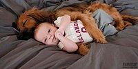 19 доказательств того, что собакам можно доверить детей