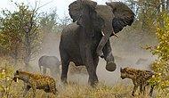 Fillerin Fil Değil Koca Cüsseli Birer İnsan Olduğunu Gösteren 17 Benzerlik