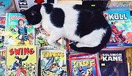 İstanbul'un Bizim Değil Kedilerin Şehri Olduğunu Kanıtlayan 27 An