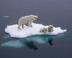 Küresel Isınma Gerçeğini Yüzümüze Vuran Öncesi/Sonrası Fotoğrafları ve Alınabilecek Önlemler
