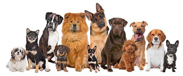 İnsanlar kendi yararlarına göre çeşitli renk, boyut, huyda köpek oluşturdu.