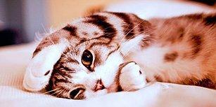 Şımarmayı Kedilerden Öğrendiğimizin 10 Kanıtı