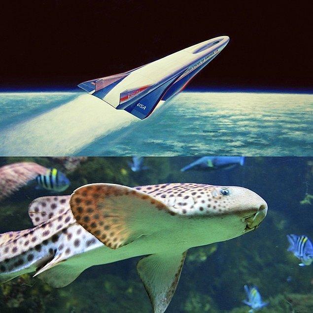 7. Aerospace Uçağı ve Kedi Balığı