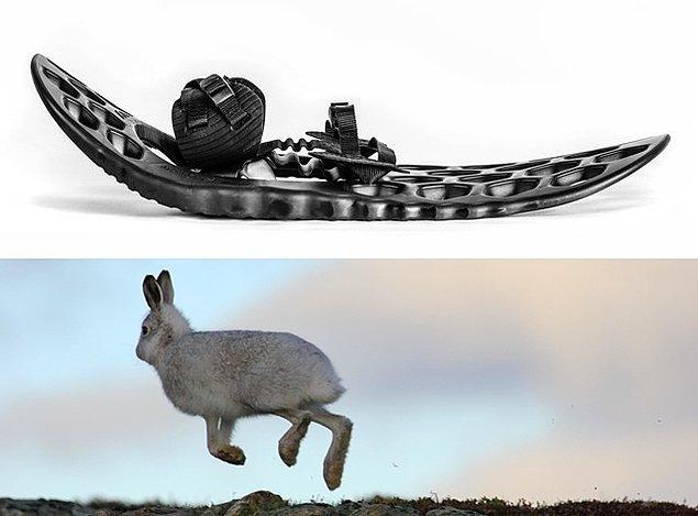 13. Kar Ayakkabısı ve Tavşan Ayağı