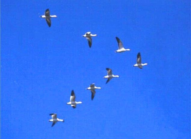 20. Uçaklar ve Kuşlar