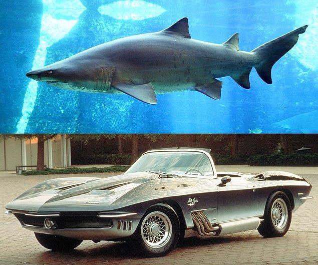 19. Corvette'in köpekbalığından esinlenerek tasarladığı otomobil.