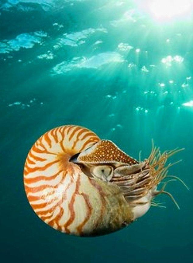 10. Denizaltılar ve Nautilus