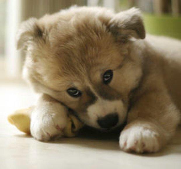 Yavru bir köpek
