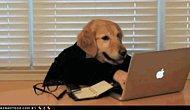 Meslek Sahibi Olmuş 6 Komik Köpek!