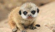 Muhtemelen Bebek Hallerini Görmediğiniz 20 Sevimli Hayvan