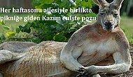 Sosyal Medyada Sürekli Karşılaştığımız İnsanlar Gibi Poz Vermiş 25 Tatlış Hayvan