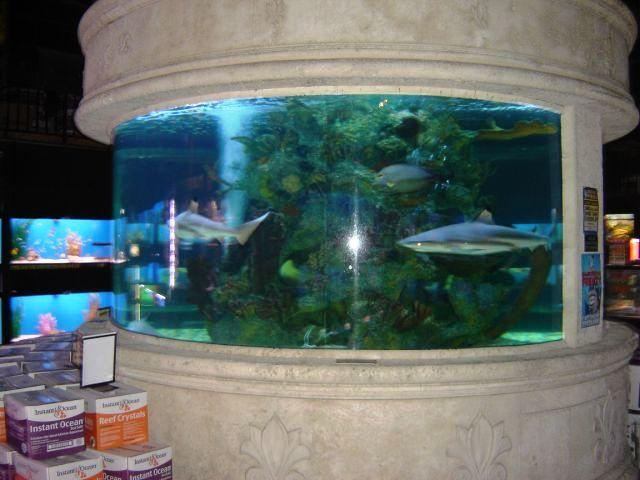 Home shark tank pictures.