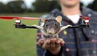 Drone'ların hayvanlar ile imtihanı