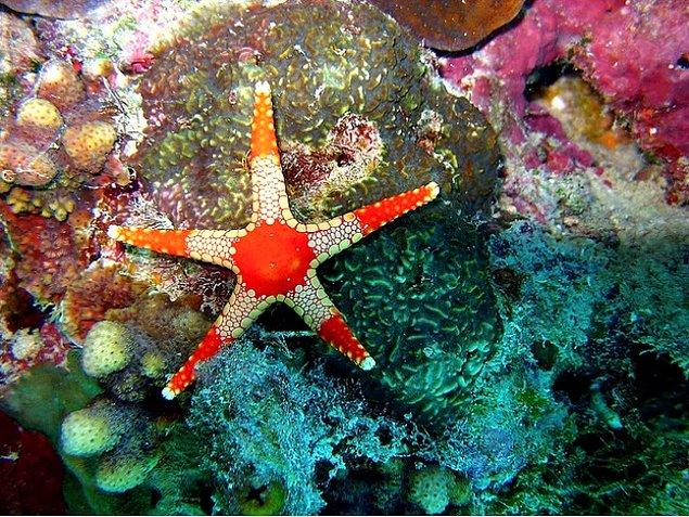 11. Wilson Adası (Avustralya)