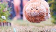 Mükemmel Zamanlamalı Fotoğrafları ile Gülümsemenizi Sağlayacak 29 Kedi